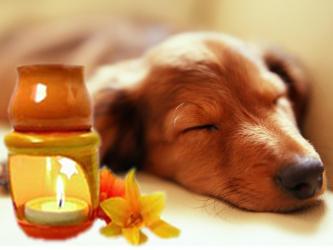 aromaterapia-cane